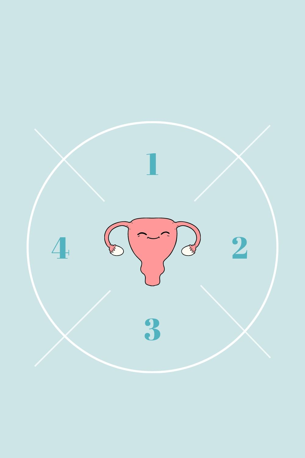 4 phases du cycle menstruel